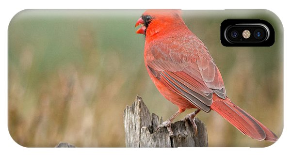 IPhone Case featuring the photograph Male Cardinal by David Waldrop