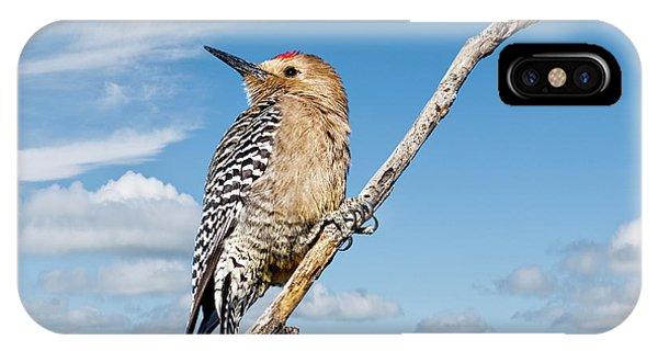 Male Gila Woodpecker IPhone Case