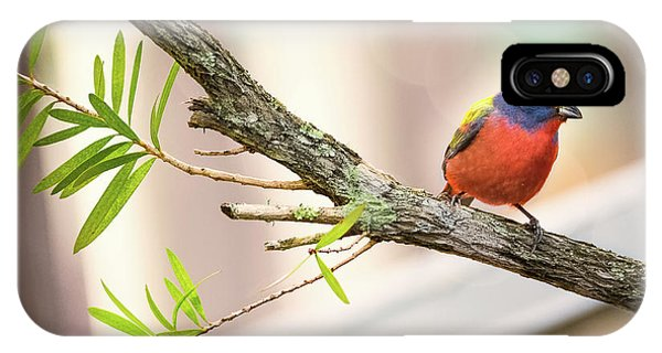 Male Painted Bunting IPhone Case