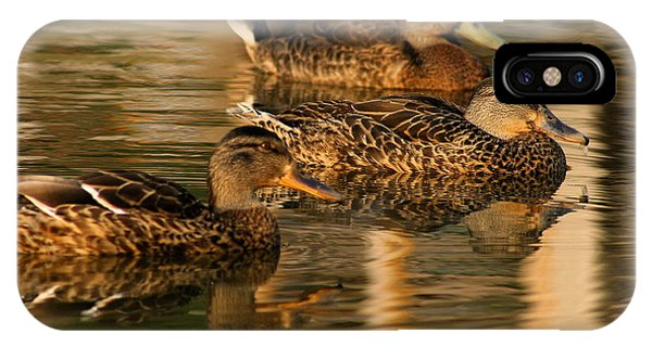 Mallards Swimming In The Water At Magic Hour IPhone Case
