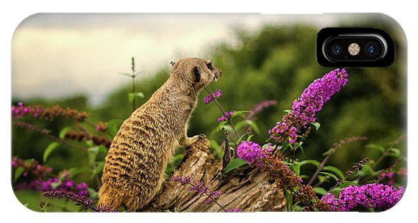Meerkat iPhone Case - Meerkat Lookout by Martin Newman