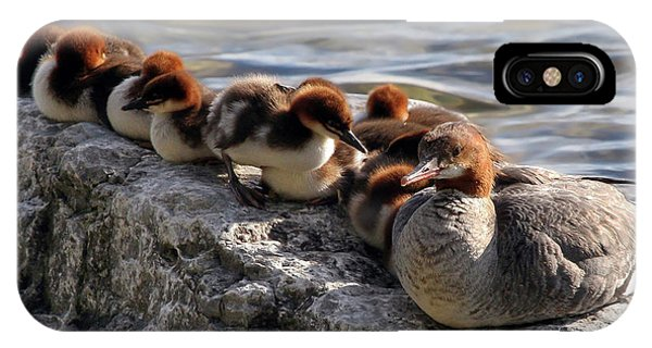 IPhone Case featuring the photograph Merganser Family by Jackson Pearson