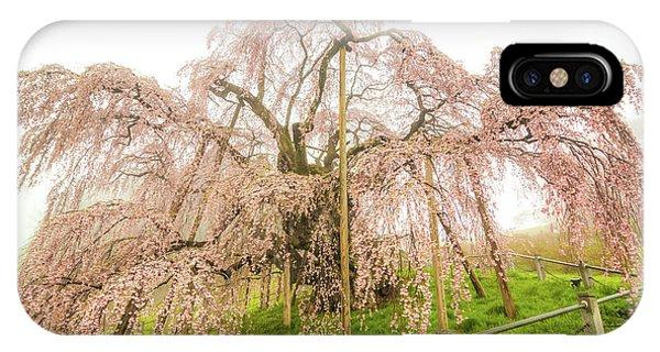 Miharu Takizakura Weeping Cherry02 IPhone Case