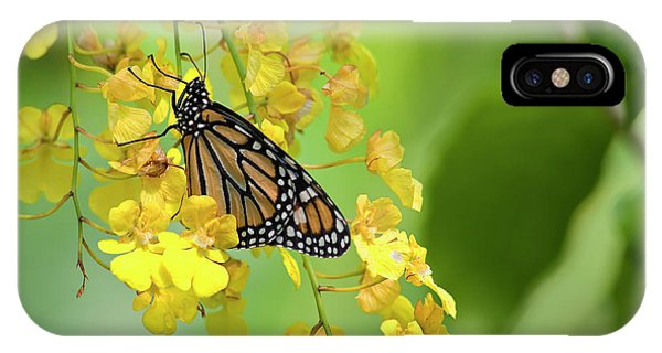 Monarch Butterfly On Yellow Orchids IPhone Case