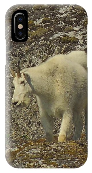 Mountain Goat Ewe IPhone Case