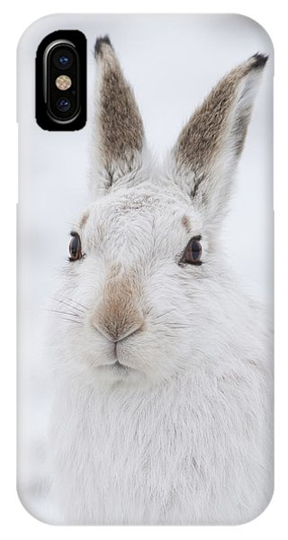 Mountain Hare In The Snow - Lepus Timidus  #1 IPhone Case