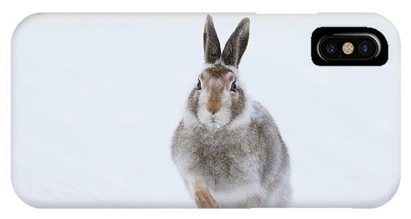 Mountain Hare - Scotland IPhone Case