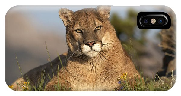 Mp iPhone Case - Mountain Lion Portrait North America by Tim Fitzharris