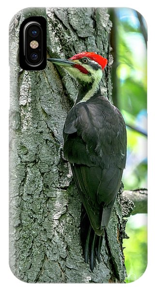 Mr. Pileated Woodpecker IPhone Case