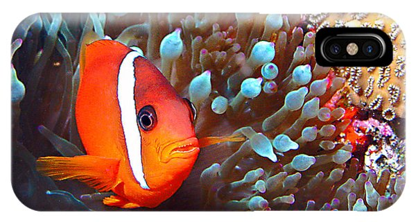 Nemo IPhone Case