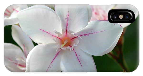 Oleander Harriet Newding  2 IPhone Case