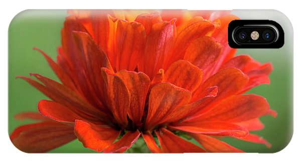 Red Zinnia  IPhone Case