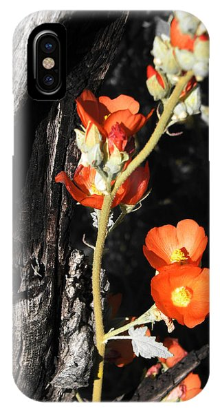 Orange Beauty IPhone Case