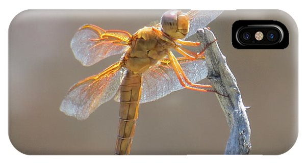 Dragonfly 5 IPhone Case