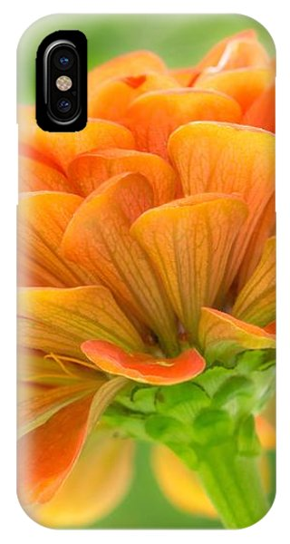 Orange Zinnia  IPhone Case