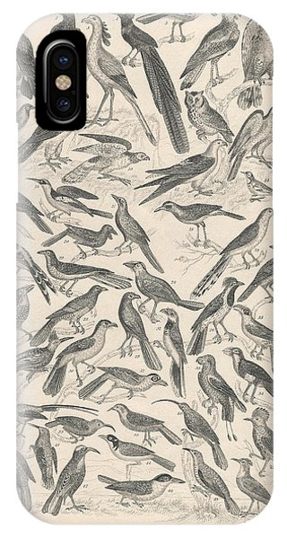 Condor iPhone Case - Ornithology by Dreyer Wildlife Print Collections