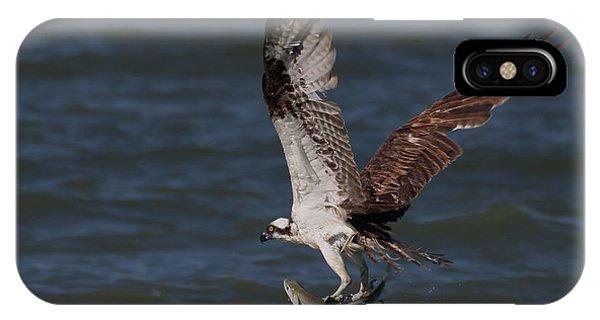 Osprey In Flight IPhone Case