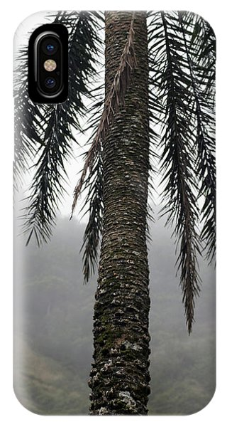 Palm, Koolau Trail, Oahu IPhone Case
