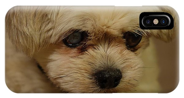 Pet Portrait - Annie IPhone Case