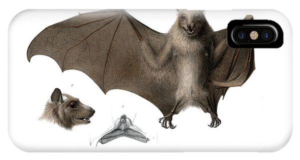 IPhone Case featuring the drawing Peters's Epauletted Fruit Bat by Hugo Troschel