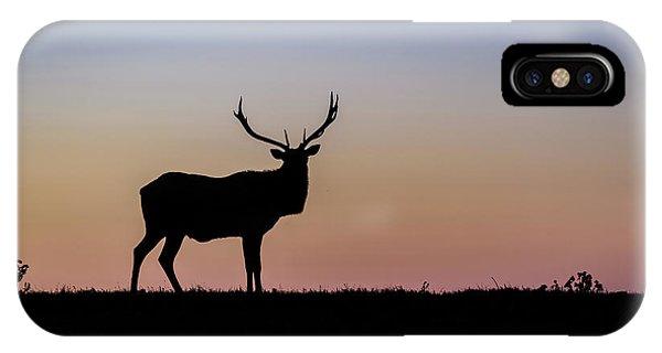 Point Reyes Elk IPhone Case