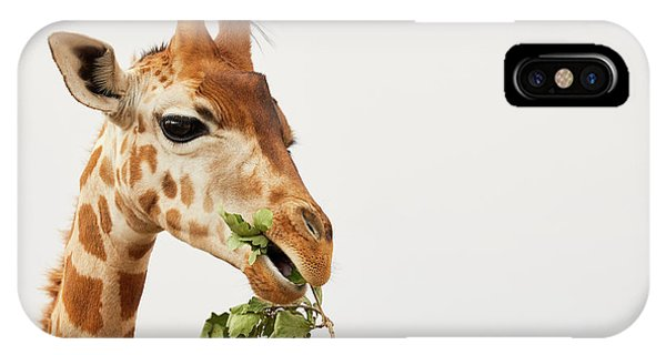 IPhone Case featuring the photograph Portrait Of A Rothschild Giraffe  by Nick Biemans