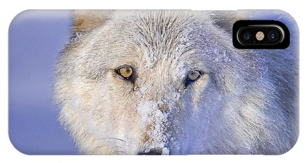 Portrait Of The White Wolf 540f IPhone Case