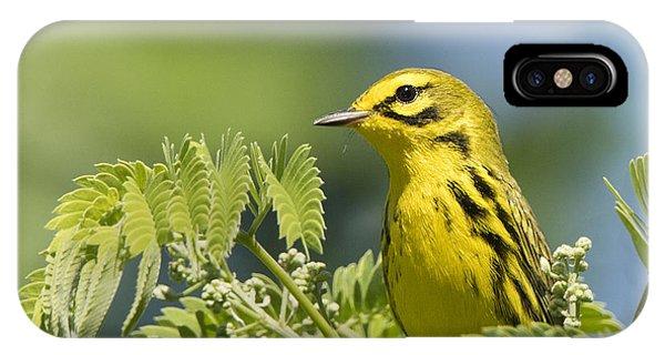 Prairie Warbler IPhone Case