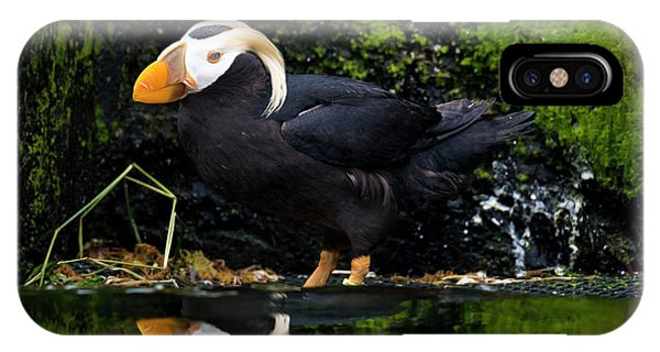Puffin Reflected IPhone Case