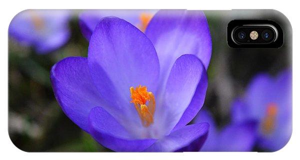 Purple Crocuses - 2015 IPhone Case