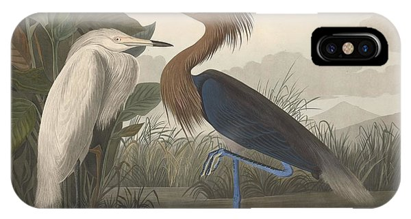 Ibis iPhone Case - Purple Heron by Dreyer Wildlife Print Collections