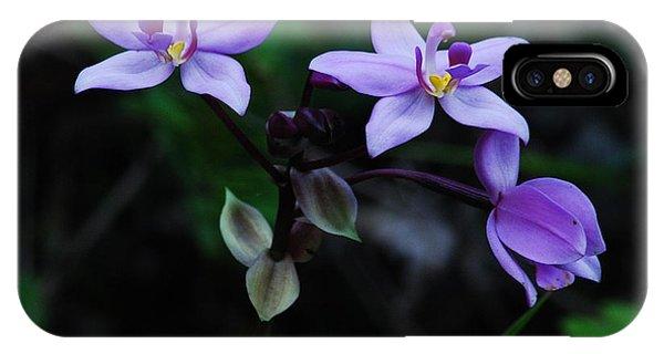 Purple Orchids 2 IPhone Case