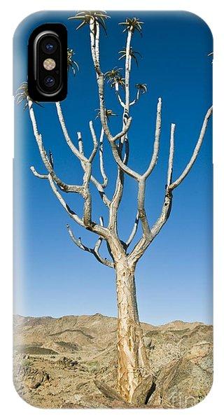 Quiver Tree IPhone Case