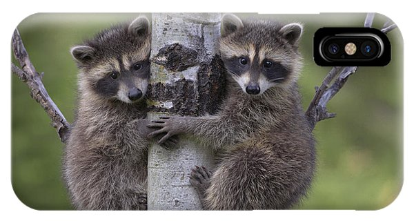Raccoon Two Babies Climbing Tree North IPhone Case