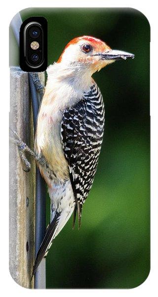 Red-bellied Woodpecker IPhone Case