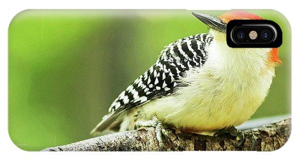 Red Bellied Woodpecker, Male, Animal Portrait IPhone Case