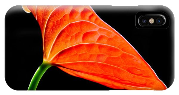 red Lily blossom IPhone Case