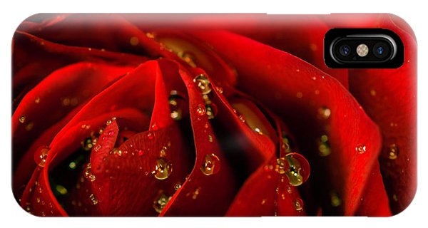 Red Rose 2 IPhone Case