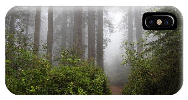 Redwood Grove IPhone Case