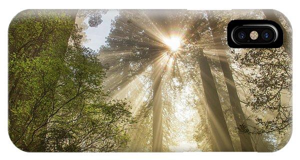 Redwoods Sunburst IPhone Case