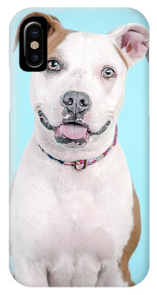 Pitbull iPhone Case - Ripley by Pit Bull Headshots by Headshots Melrose