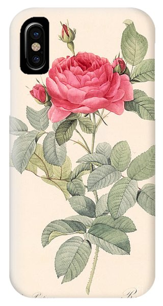 Redoute iPhone Case - Rosa Gallica Pontiana by Pierre Joseph Redoute