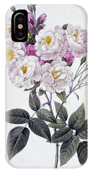 Redoute iPhone Case - Rosa Noisettiana by Pierre Joseph Redoute