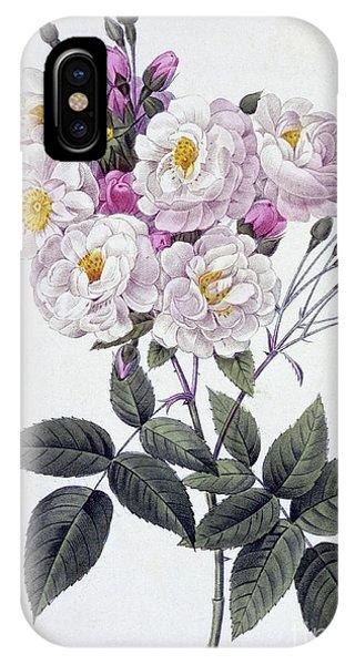 Rosa iPhone Case - Rosa Noisettiana by Pierre Joseph Redoute
