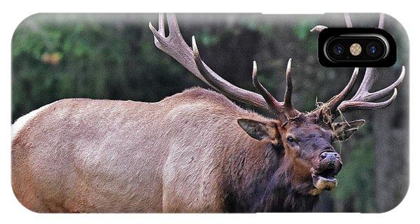 Royal Roosevelt Bull Elk IPhone Case
