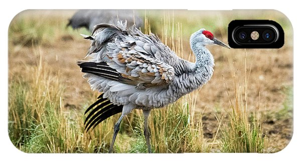 Sandhill Crane iPhone Case - Ruffled Feathers by Mike Dawson