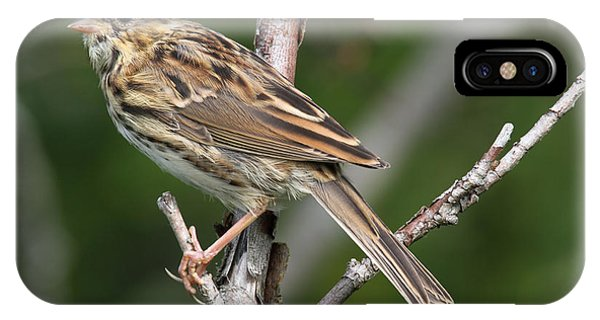 Savannah Sparrow IPhone Case