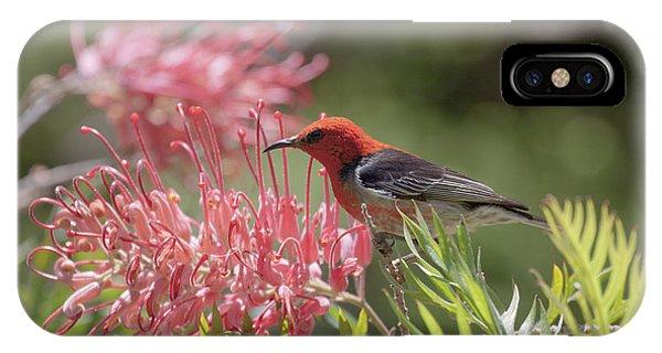 Scarlet Honeyeater IPhone Case