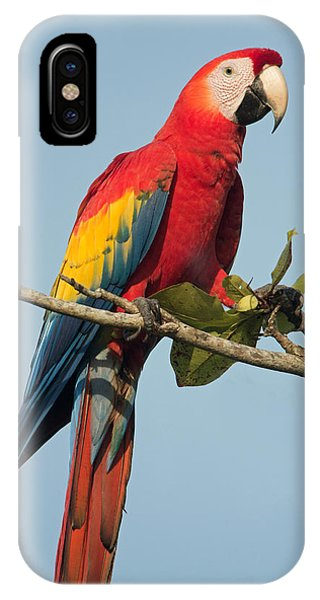 Macaw iPhone Case - Scarlet Macaw Ara Macao, Tarcoles by Panoramic Images