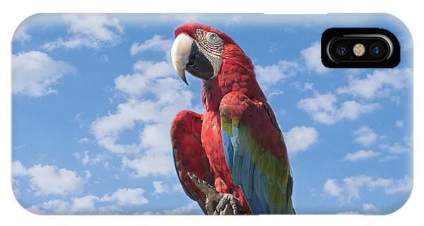 Macaw iPhone Case - Scarlet Macaw by Kim Hojnacki